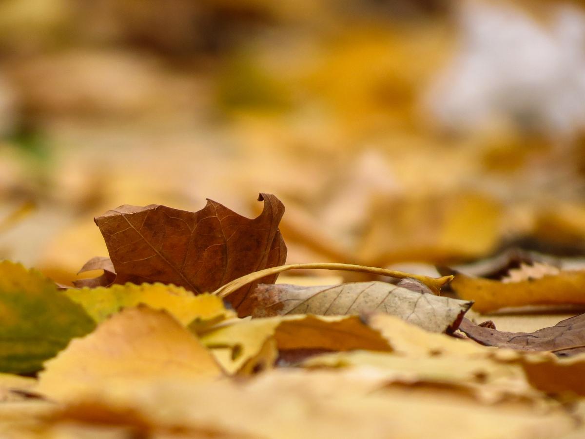 Winterklaar Maken Tuin : Tuin winterklaar maken hovenier helpt
